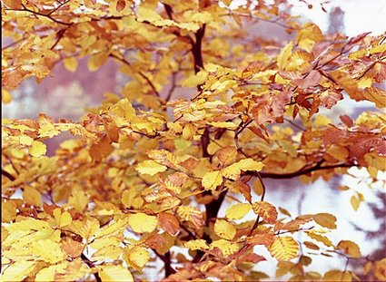 Die Farben des Herbstes 2009