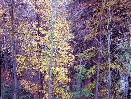 Herbstfarben 2009